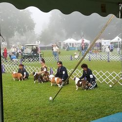 In the photo you will see the second dog in the ring is Zoey, with Kim, and two following her is Maize with Diane.