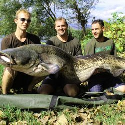 Guided Catfishing river ebro Spain Silure, Som, Waller Welse