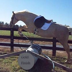 Gold Finish- Stallion!