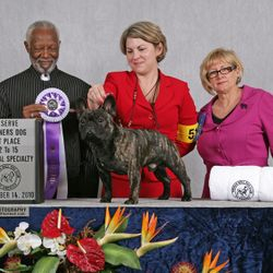 reserve winners dog at the independent specialty 2010!