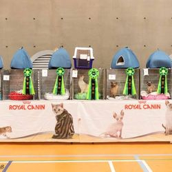 FurReFae Miss Poppy Mae  7th Best in Show (neuters)