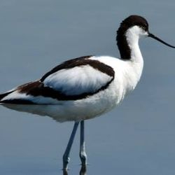 marvelous experience by visiting the best birding spots in Greece.
