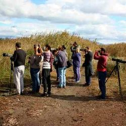 Large (for Greek standards) number of birders visited the area to look for the bird