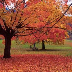 Got leaves in spring or fall, we can handle them all!