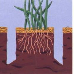 We get down to the root of your lawn care needs with custom FERTILIZER programs and CORE PLUG AERATION.