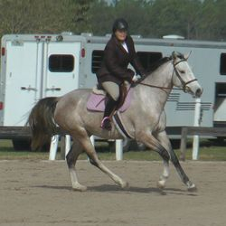 Dec 2013, 3 years old 2nd under saddle show