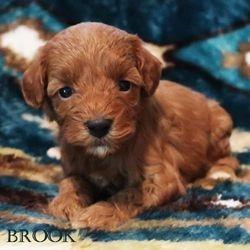 The Seller Family has chosen Brook