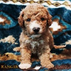 Nancy has chosen Ranger (now Wabi)