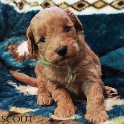 Ashley has chosen Scout