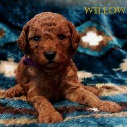 The Mehta Family has chosen Willow (now Mochi)
