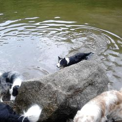 Moose & Kaspar swimming, Harry & Quiz having a good sniff
