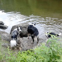 Moose & Kas watching Harry enjoying the lake