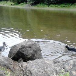 Moose watching Kas swimming