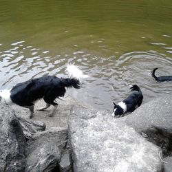 "Phebie & Kaspar swimming as Harry 'has a good shake"""