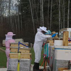 inspecting hives, honey bees
