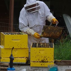 bee frames being checked