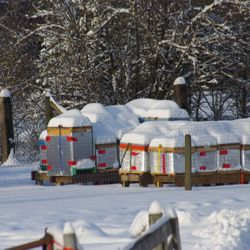 bee hives in winter, honey bees
