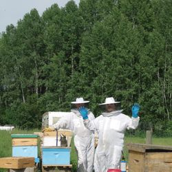 checking bee hives, honey bees