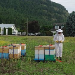 inspecting bee hives, honey bees,