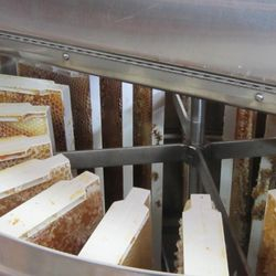 frames from bee hive box extracting honey