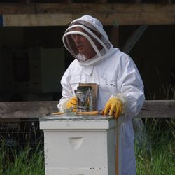 checking bee hives apiary