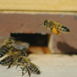 bee drones and bee hives
