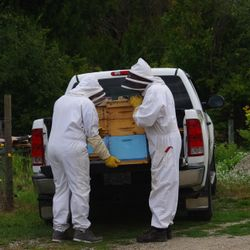 moving hives of honey bees