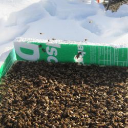 full hive of bees in winter