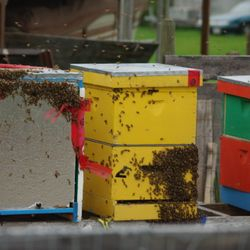 bee hive boxes in spring