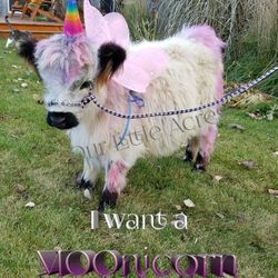 The Original MOOnicorn at Our Little Acres