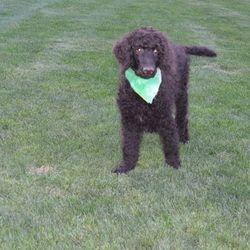 Green Collar Male
