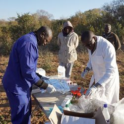 UNZA and HerpeZ team collecting arenavirus samples in Zambia