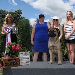 Best in Show Bullmastiff Fanciers of Canada Regional Specialty - Thank you breeder judge Cheryl Pike - Aug 2016