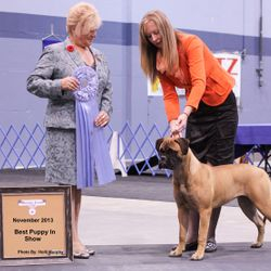 Best Puppy in Show - Nov 2013 at just 8 months - Huge thank you to judge Lee-Ann Bateman
