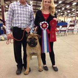 Best of Breed Maritime Bullmastiff booster 2014