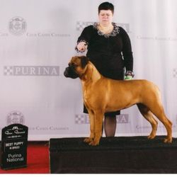 Roxi 8 months old - Purina National Best Puppy in Breed 2010