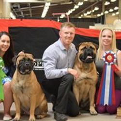 Best of Breed Maritime Bullmastiff booster 2015
