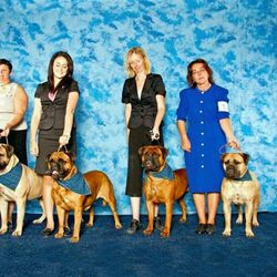 Jada 3rd from left - Winners bitch at bullmastiff booster