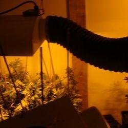 indoor flowers/strains