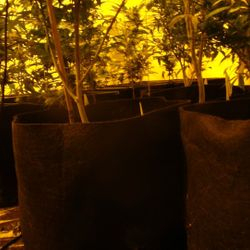 Clones available now