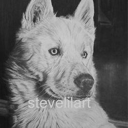 Siberian Husky portrait pencil rendered artwork by Steve Lilly, stevelilart
