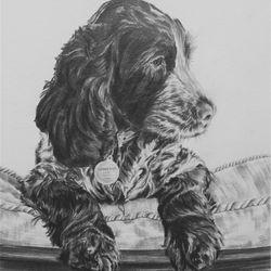 Springer Spaniel Puppy pencil rendered artwork by Steve Lilly, stevelilart