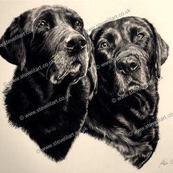 Dog portrait/pencil rendered artwork by Steve Lilly, stevelilart