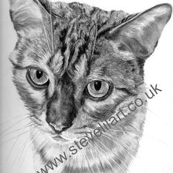 Cat portrait/commission, pencil rendered artwork by Steve Lilly, stevelilart