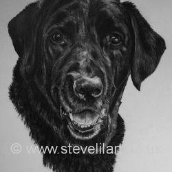 Commissioned dog portrait, pencil rendered artwork by Steve Lilly, stevelilart