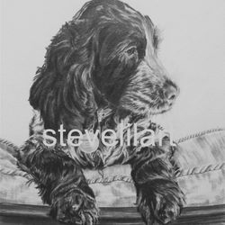 King Charles Spaniel portrait by Steve Lilly, private commission