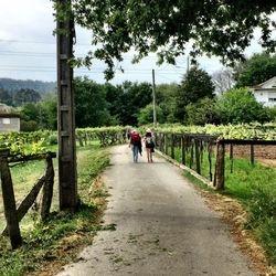 Camino de Santiago (Portuguese Route)