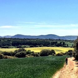 Camino de Santiago (French Route)