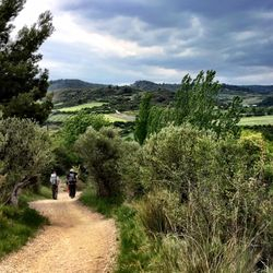 Camino de Santiago (French Route)