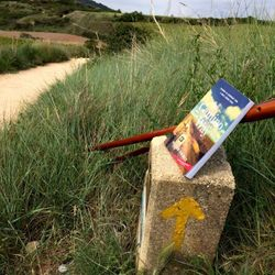 The Camino Way on the Camino